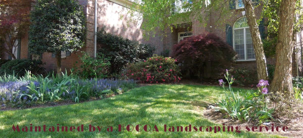 Maintained Lawncare by HOCOA